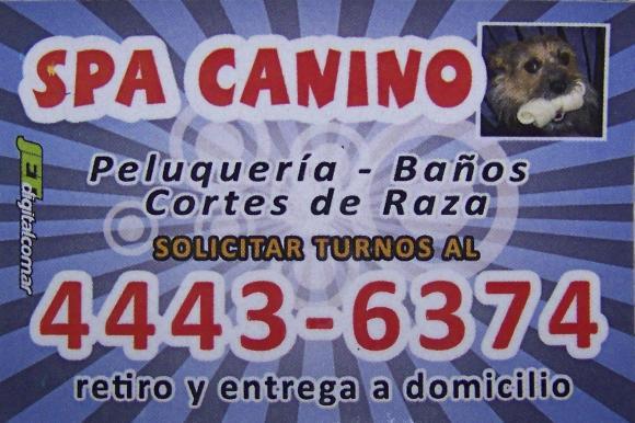 Spa Canino, servicio de peluqueria canina