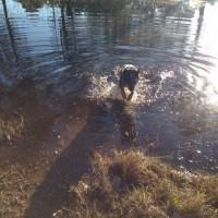 Go Fetch Dog Walking and Boarding