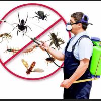 Pest Control Logan | Dinno's Carpet Cleaning & Pest Control
