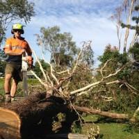 Tree Lopping Brisbane