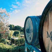 Yarra Valley Winery Tours from Melbourne