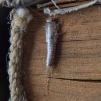 Termite and Pest Control North Brisbane