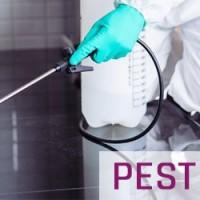 Best Pest Control in Brisbane