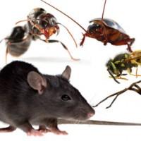 Impressive Pest Control Brisbane