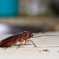 Pest Control Warragul