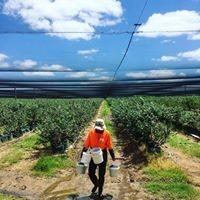 Agri Labour Australia | Agricultural Recruitment