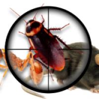 Pest Control Joondalup
