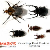 Pest Control Doveton