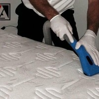 Accredited Cleaning and Pest Solutions