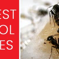 Pest Control Essendon