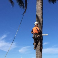 Sydney Green Group - Land Clearing Sydney