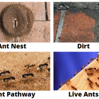 Ant Control Sydney