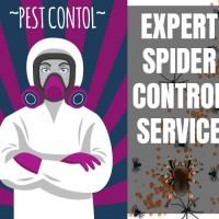 Spider Control Brisbane
