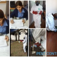 Optima Cleaners House Cleaning Services in Brisbane