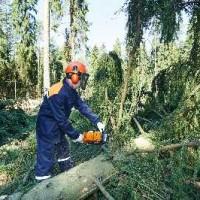 JH s Tree Service