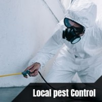 Pest Control South Brisbane