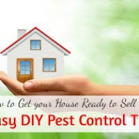 Eco Guard Pest Control