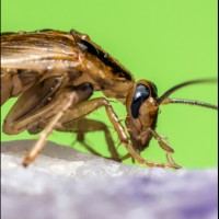 Cockroaches Control Brisbane