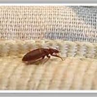 Bed Bugs Control Brisbane