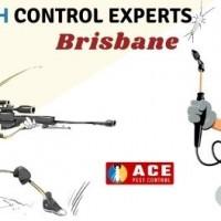 Silverfish Extermination Brisbane