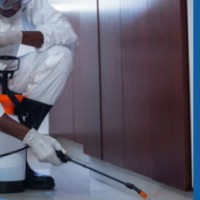 Pest Removal Southport