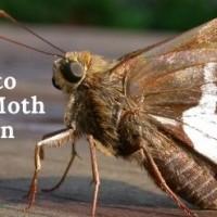 Ace Moth Removal Brisbane