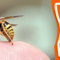 Bees And Wasps Control Brisbane