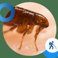 Fast Pest Control Perth