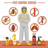 Pest Control Narangba