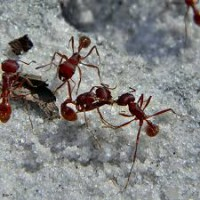 Ant Control Moreton Bay
