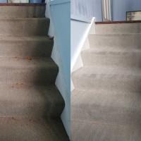 Austech Carpet Steam Cleaning & Pest Management