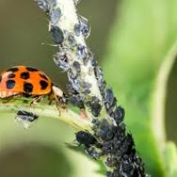 Best Pest Control Perth