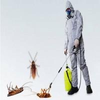 Cockroach Control Brisbane