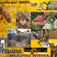 Grupo Colmena