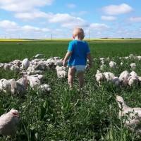 Spring Creek Farm Inc