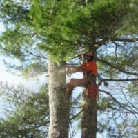Richmond Hill Tree Service