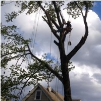 Tree Removal East York