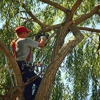 Whitby Tree Service