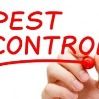 Natural Pest Solutions Barrie