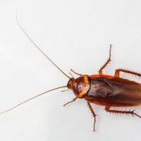 Pest Control Toronto Exterminator