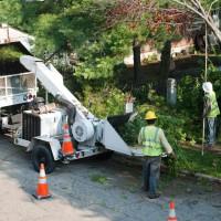 Burlington Tree Care