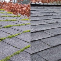 Next Level Moss Treatment and Roof Cleaning