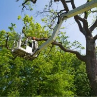 Ajax Tree Removal