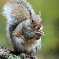 Richmond Hill Wildlife Removal