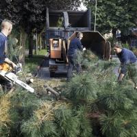 GMK Tree Service