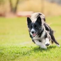 Eazy Dog Training