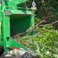 Brampton Tree Service