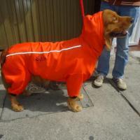 Doggy accesorios caninos