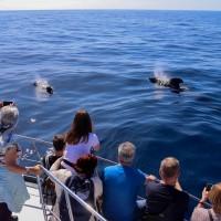 Whale watching OceanExplorer Flipper & Bussard