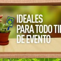 Mini Plants Guatemala (Cactus, Suculentas Y Plantas En Miniatura)